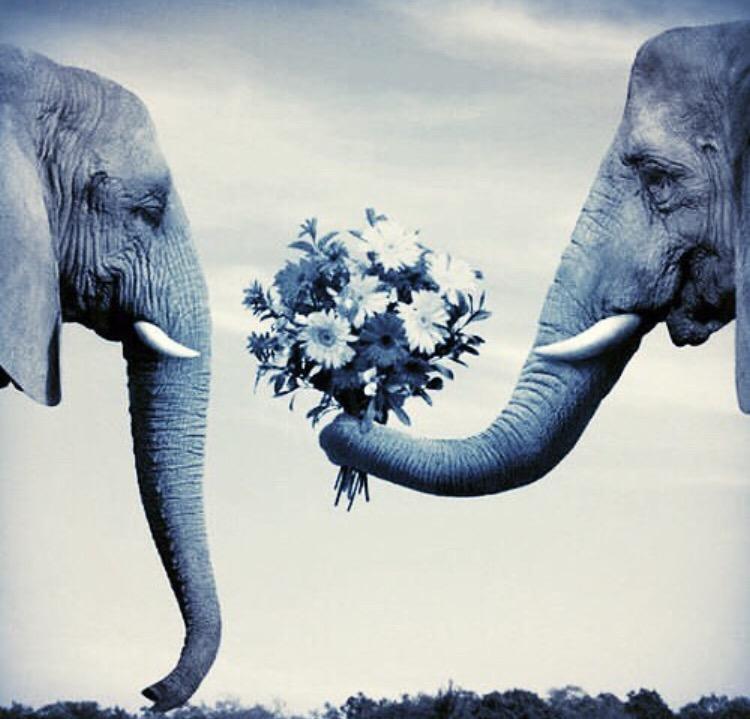 von elefanten und blumen   FEL!C!OUS YOGA
